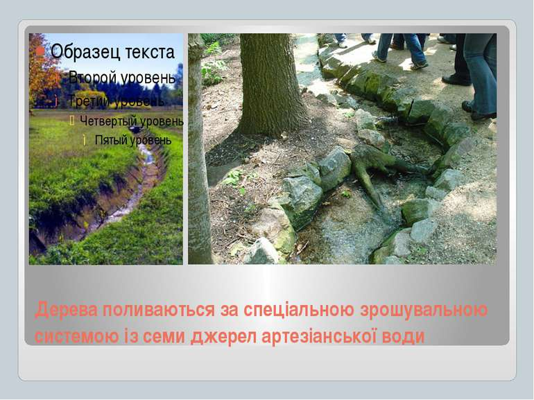 Дерева поливаються за спеціальною зрошувальною системою із семи джерел артезі...