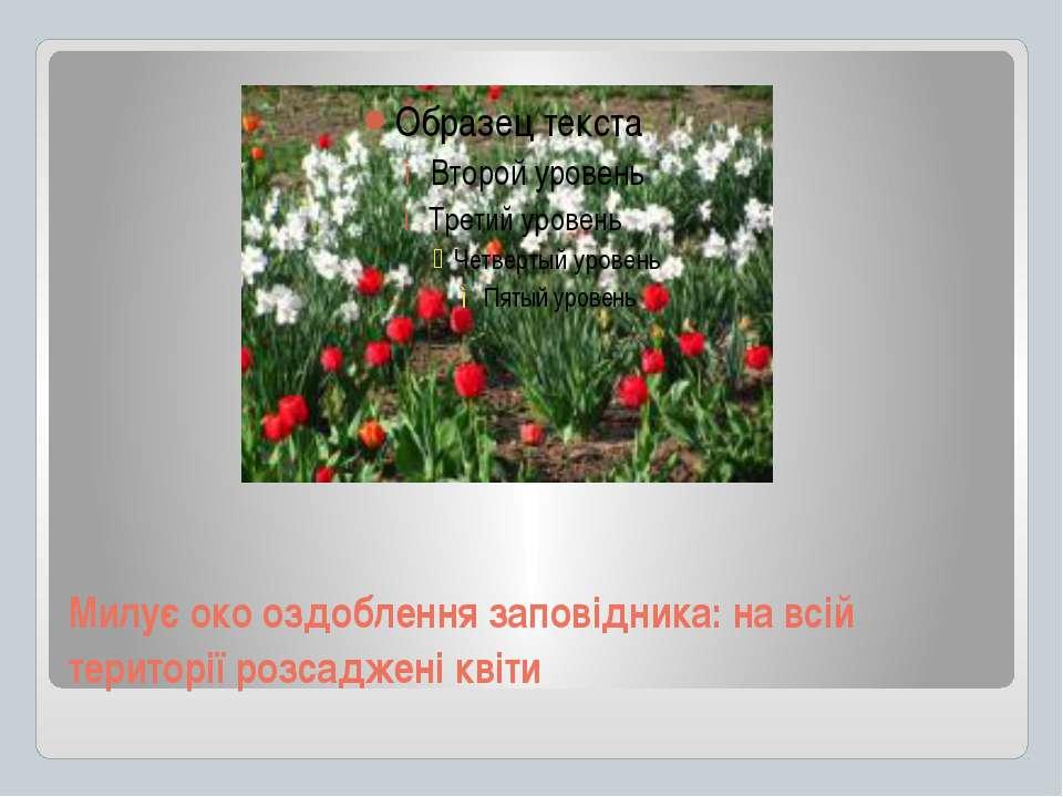 Милує око оздоблення заповідника: на всій території розсаджені квіти