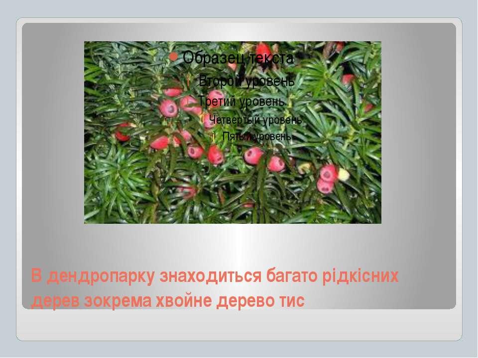 В дендропарку знаходиться багато рідкісних дерев зокрема хвойне дерево тис