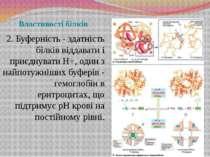 Властивості білків 2. Буферність - здатність білків віддавати і приєднувати Н...