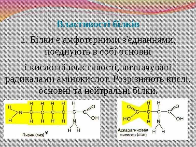 Властивості білків 1. Білки є амфотерними з'єднаннями, поєднують в собі основ...