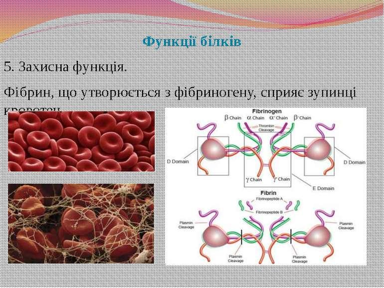 Функції білків 5. Захисна функція. Фібрин, що утворюється з фібриногену, спри...
