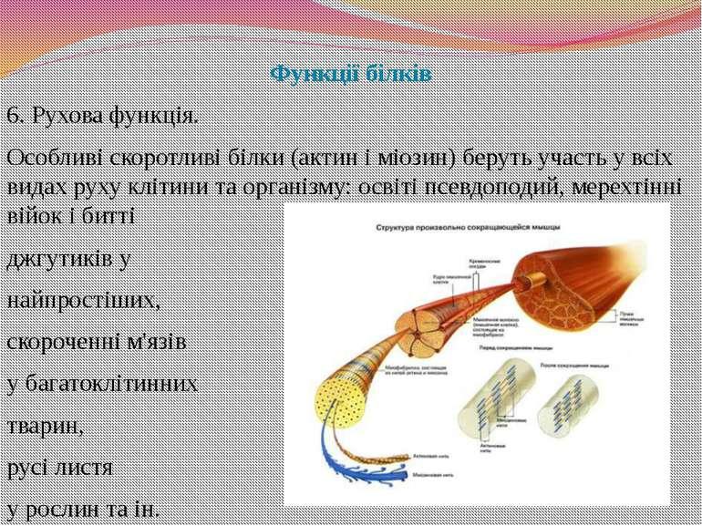 Функції білків 6. Рухова функція. Особливі скоротливі білки (актин і міозин) ...