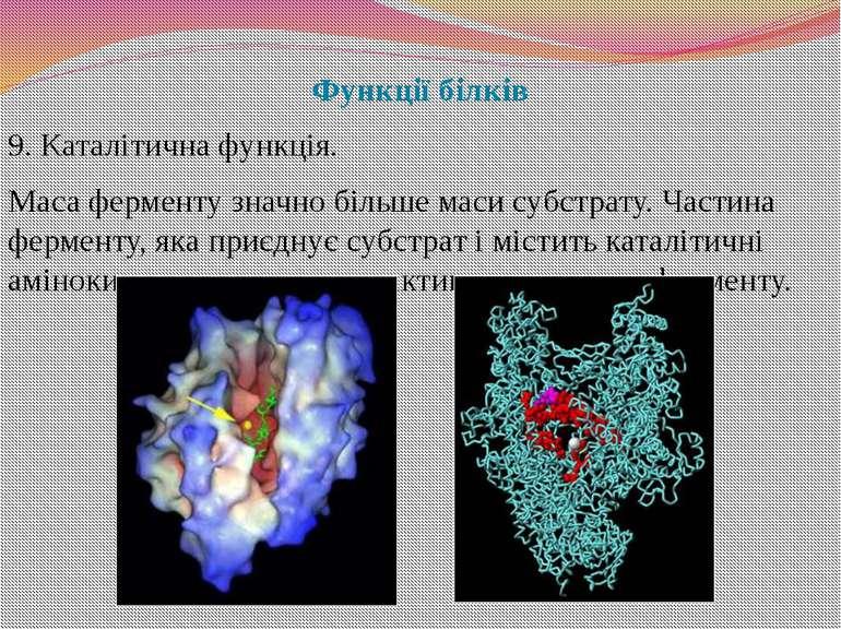 Функції білків 9. Каталітична функція. Маса ферменту значно більше маси субст...
