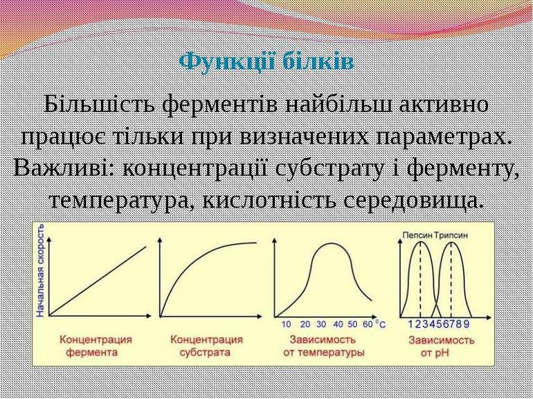 Функції білків Більшість ферментів найбільш активно працює тільки при визначе...