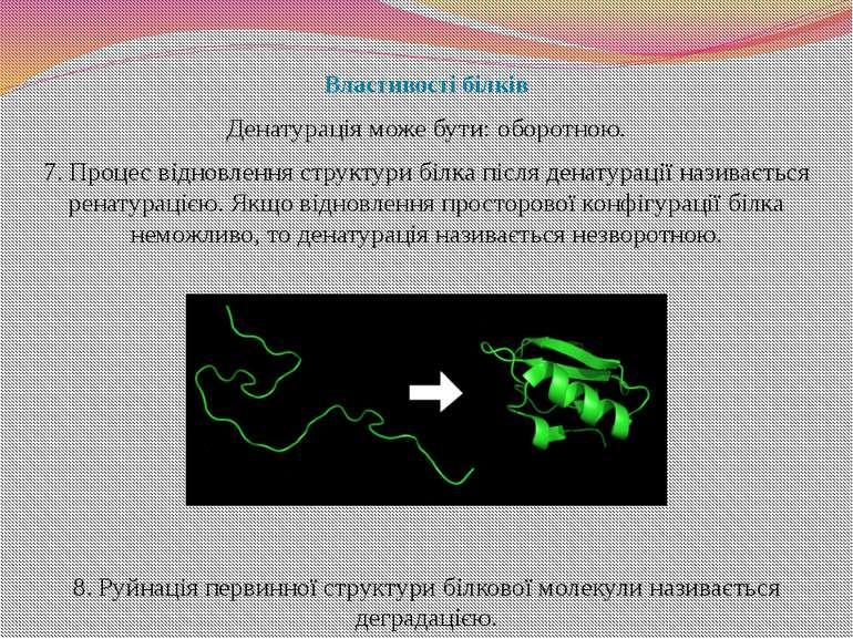 Властивості білків Денатурація може бути: оборотною. 7. Процес відновлення ст...