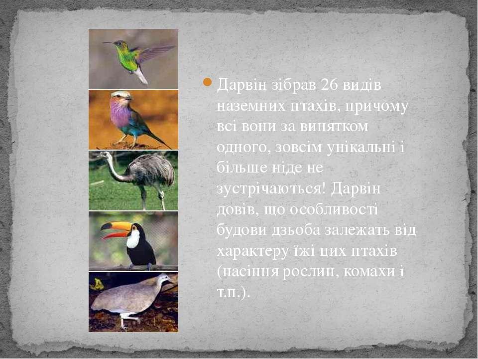 Дарвін зібрав 26 видів наземних птахів, причому всі вони за винятком одного, ...