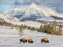 У парку водяться майже 60 видів ссавців, у тому числі рідкісні: вовк, рись і ...