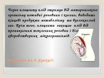 Плацента та її функції: Через плаценту плід отримує від материнського організ...