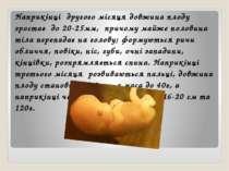 Наприкінці другого місяця довжина плоду зростає до 20-25мм, причому майже пол...