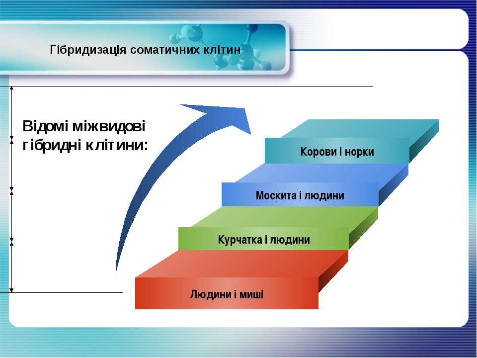 Гібридизація соматичних клітин Корови і норки Москита і людини Курчатка і люд...