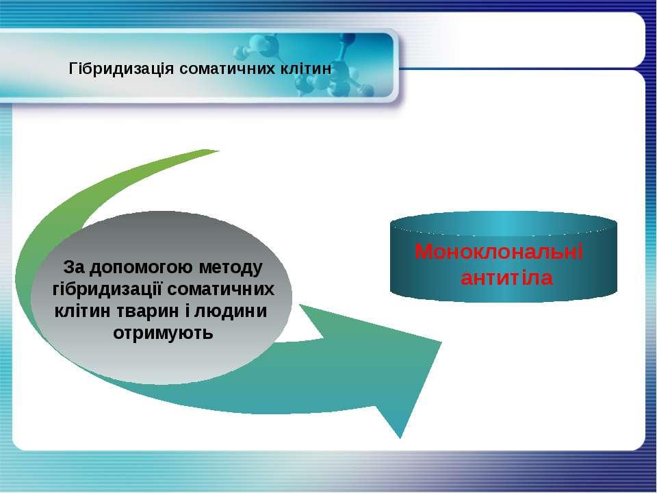 Гібридизація соматичних клітин За допомогою методу гібридизації соматичних кл...