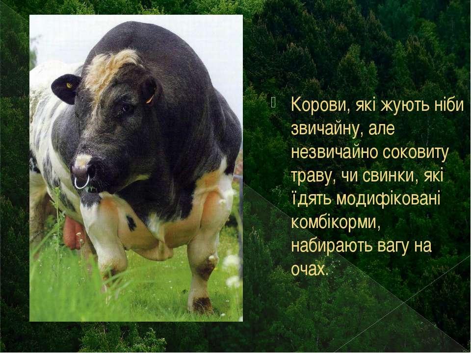 Корови, які жують ніби звичайну, але незвичайно соковиту траву, чи свинки, як...
