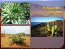 Посухостійкі рослини