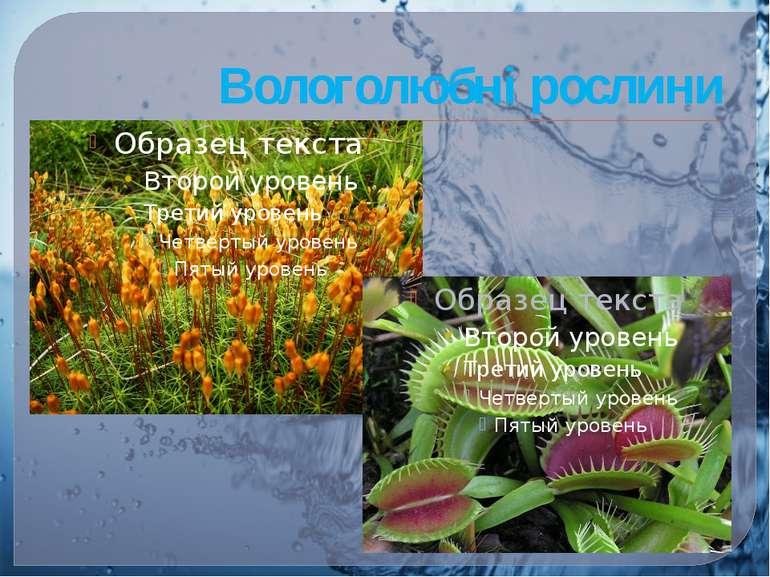 Вологолюбні рослини