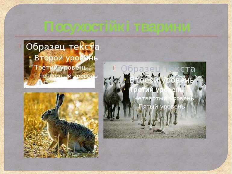 Посухостійкі тварини