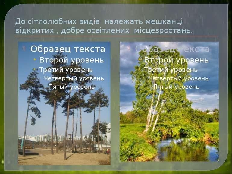 До сітлолюбних видів належать мешканці відкритих , добре освітлених місцезрос...
