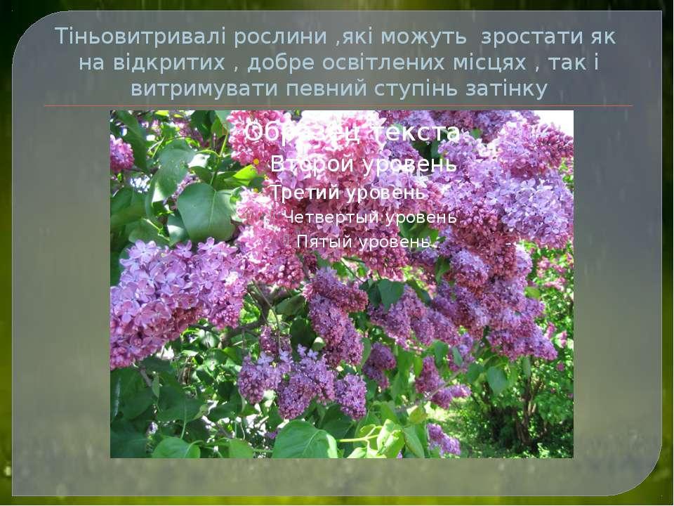 Тіньовитривалі рослини ,які можуть зростати як на відкритих , добре освітлени...