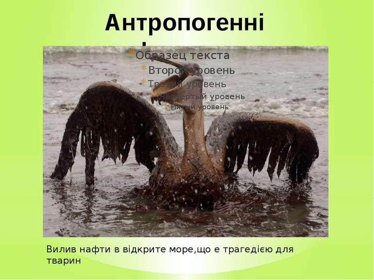 Антропогенні фактори Вилив нафти в відкрите море,що е трагедією для тварин