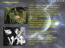 Собаки в космосі Лайка - перша тварина, виведене на орбіту Землі. Вона була з...