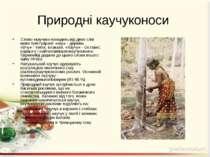 Природні каучуконоси Слово «каучук» походить від двох слів мови тупі-гуарані:...