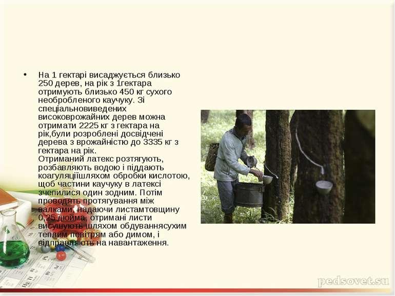 На 1 гектарі висаджується близько 250 дерев, на рік з 1гектара отримують близ...