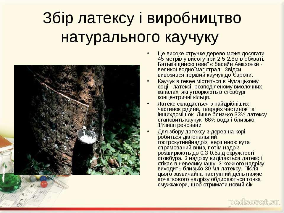 Збір латексу і виробництво натурального каучуку Це високе струнке дерево може...