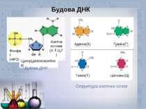 Будова ДНК Фосфат (НРО₄) Цукор(дезоксирибоза) Азотна основа (А,Т,Ц,Г) Будова ...