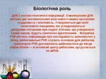 Біологічна роль ДНК є носіємгенетичної інформації. З молекулами ДНК зв'язані...