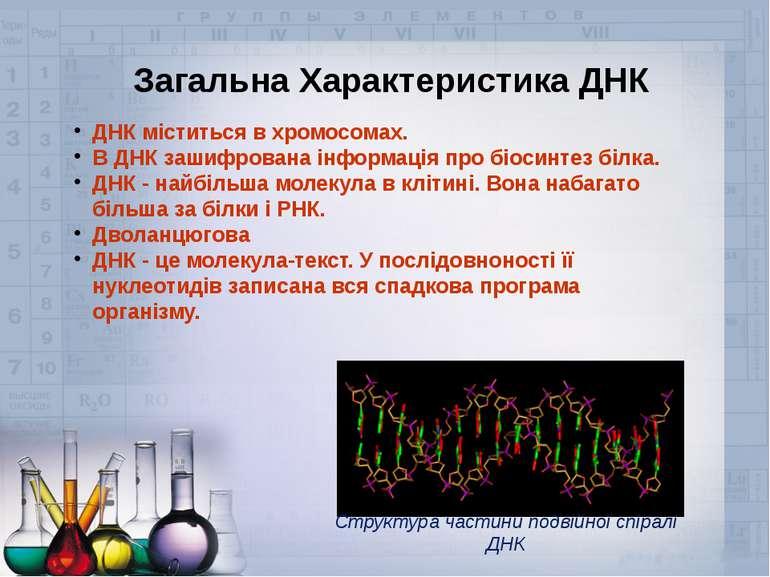 Загальна Характеристика ДНК ДНК міститься в хромосомах. В ДНК зашифрована інф...