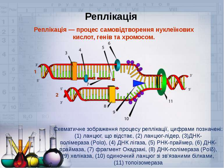Реплікація— процес самовідтворення нуклеїнових кислот,генів тахромосом. Сх...