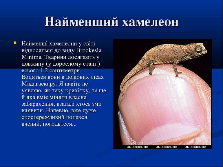 Найменший хамелеон Найменші хамелеони у світі відносяться до виду Brookesia M...