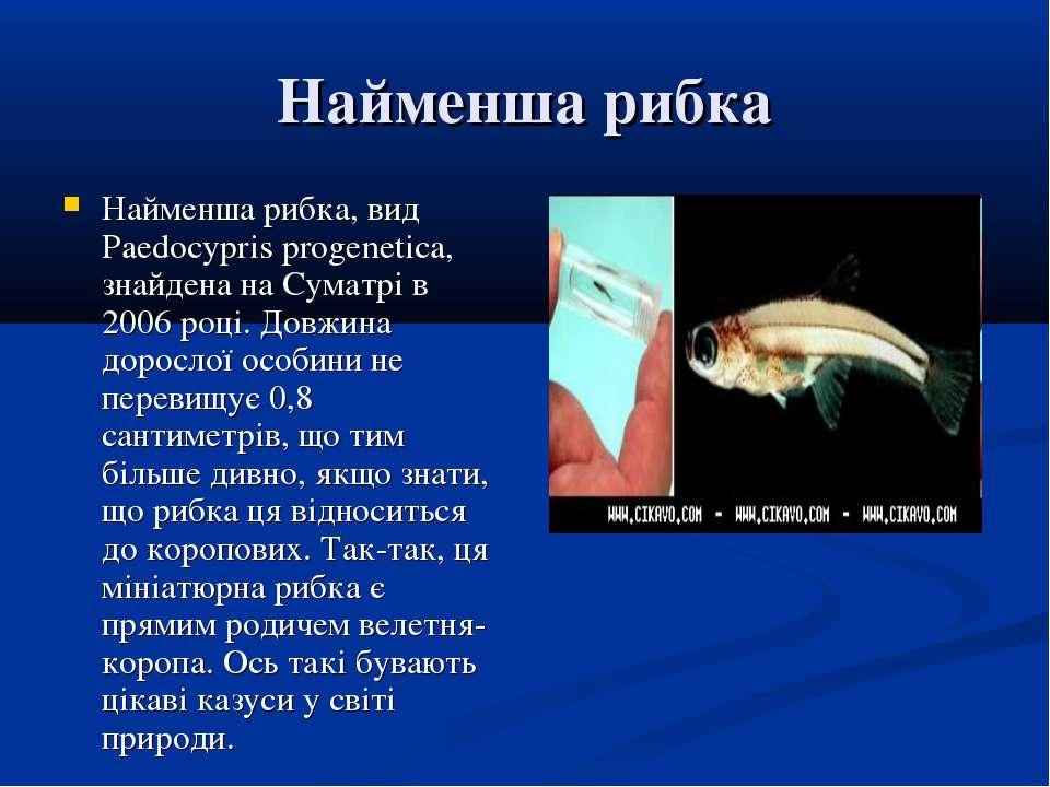 Найменша рибка Найменша рибка, вид Paedocypris progenetica, знайдена на Сумат...