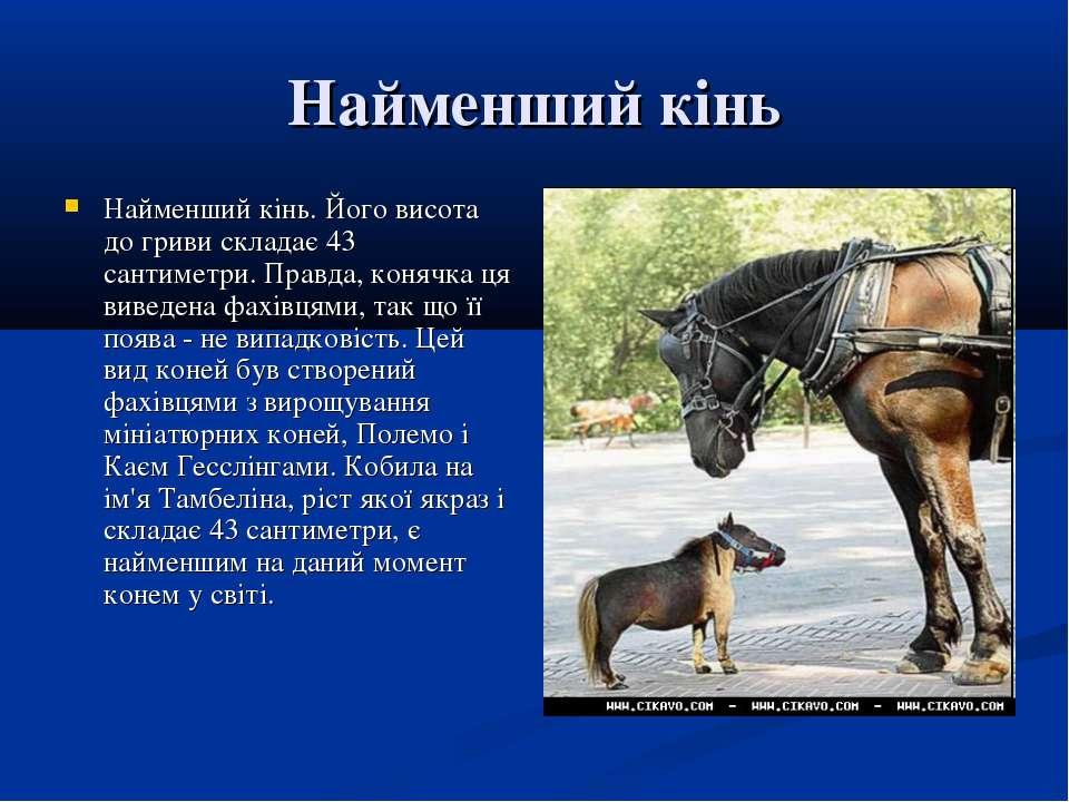 Найменший кінь Найменший кінь. Його висота до гриви складає 43 сантиметри. Пр...