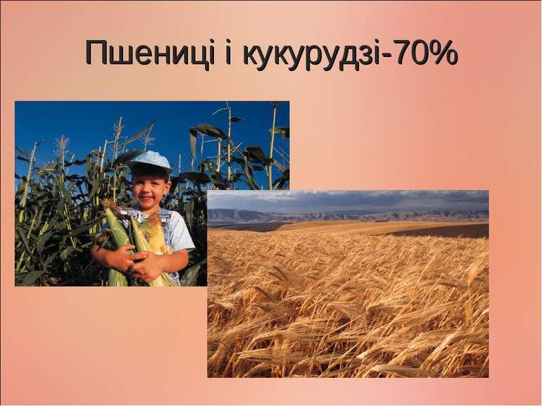 Пшениці і кукурудзі-70%