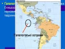 Галапогоські острови(на захід від узбережжя Еквадору) відомі своїми черепахам...