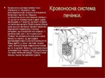 Кровоносна система печінки. Кровоносна система печінки тісно пов'язана з її б...