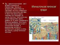 Міжчасточкові печінкові тріади Віднавколочасточковихвені артерій почин...