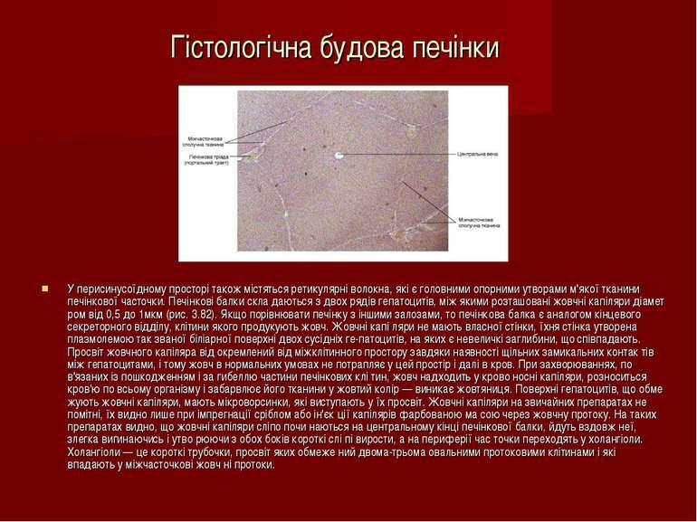 Гістологічна будова печінки У перисинусоїдному просторі також містяться ретик...