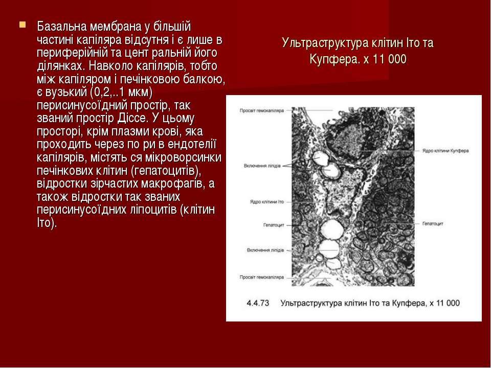 Ультраструктура клітин Іто та Купфера. х 11 000 Базальна мембрана у більшій ч...