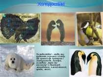Холодостійкі Холодостійкі – види, що надають перевагу холоду. Це організми Ар...