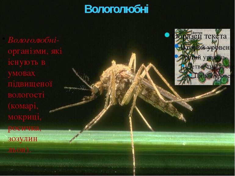 Вологолюбні Вологолюбні- організми, які існують в умовах підвищеної вологості...