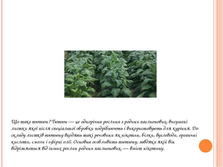 Що таке тютюн? Тютюн — це однорічна рослина з родини пасльонових, висушені ли...