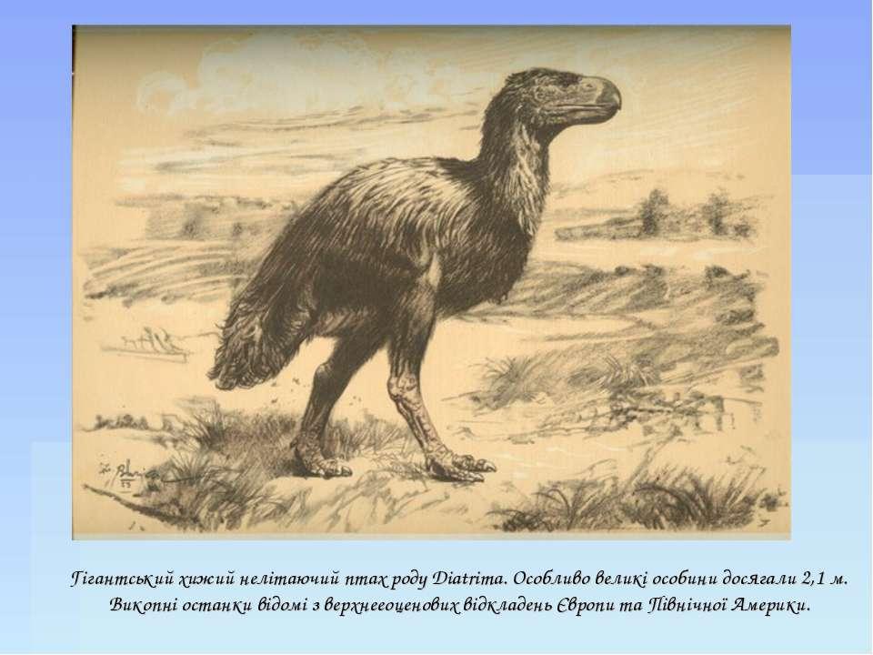 Гігантський хижий нелітаючий птах роду Diatrima. Особливо великі особини дося...