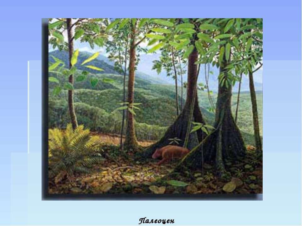 Палеоцен