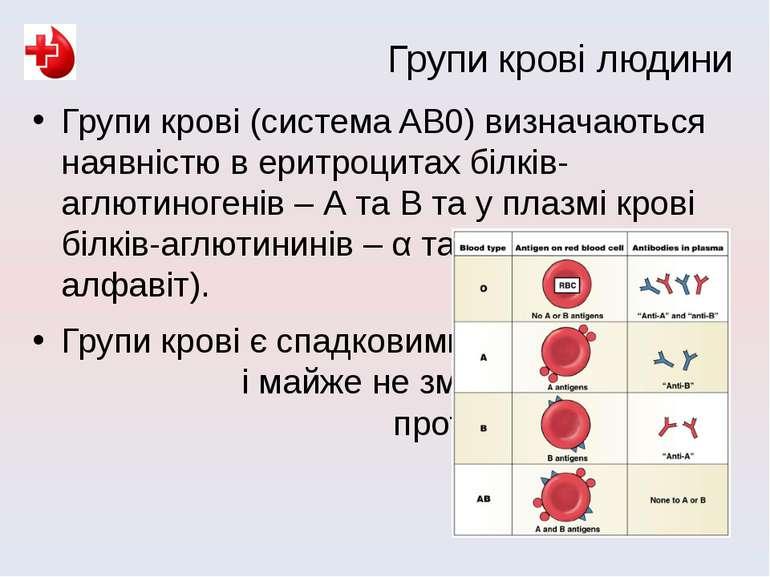 Групи крові (система AB0) визначаються наявністю в еритроцитах білків-аглютин...