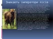 Зникають імператори лісів Незважаючи на те, що ці тварини занесені до Червоно...