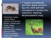 У тварин класифікація життєвих форм залежить від того, який критерій покладен...