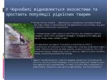 У Чорнобилі відновлюється екосистема та зростають популяції рідкісних тварин ...