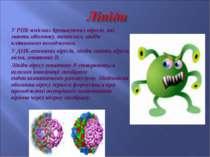 У РНК-вмісних брунькуючих вірусів, які мають оболонк�